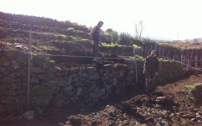 Repairing the terraces of our new vineyard at Solicchiata